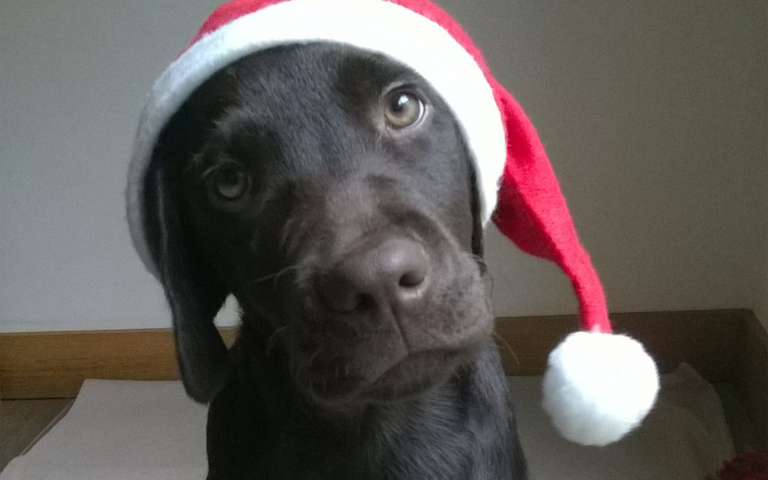 DECEMBER = Kerstmaand !
