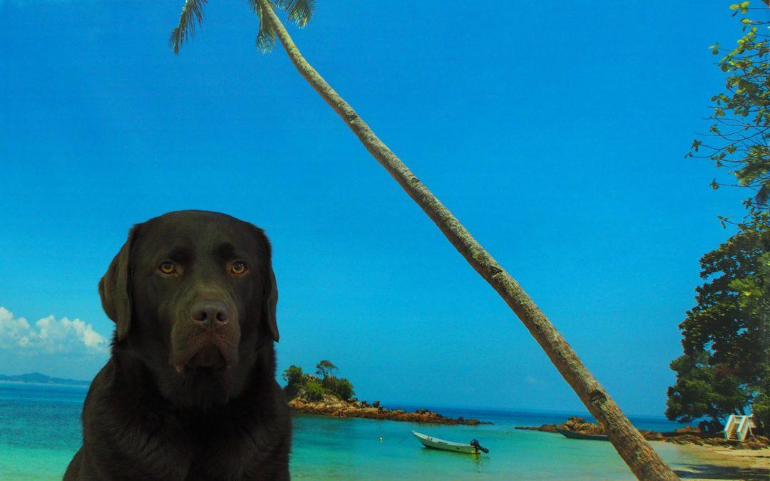 Juli = vakantie!