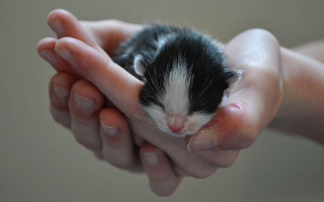 6 tips voor een katvriendelijk huis