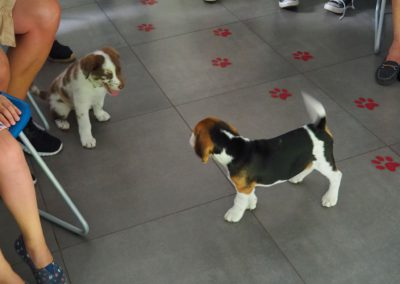 JACK en BAZIEL op de puppyavond