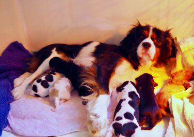 WISKE en haar pups