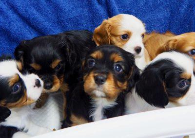 Pups van WISKE