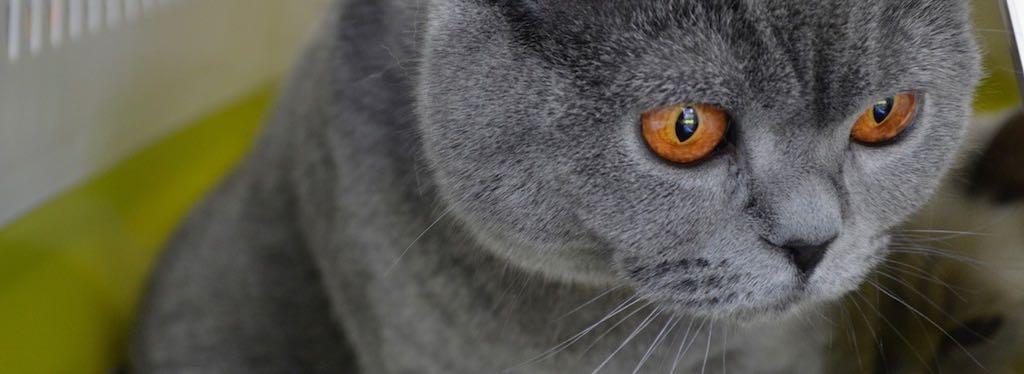 Oktober = katten in de kijker !