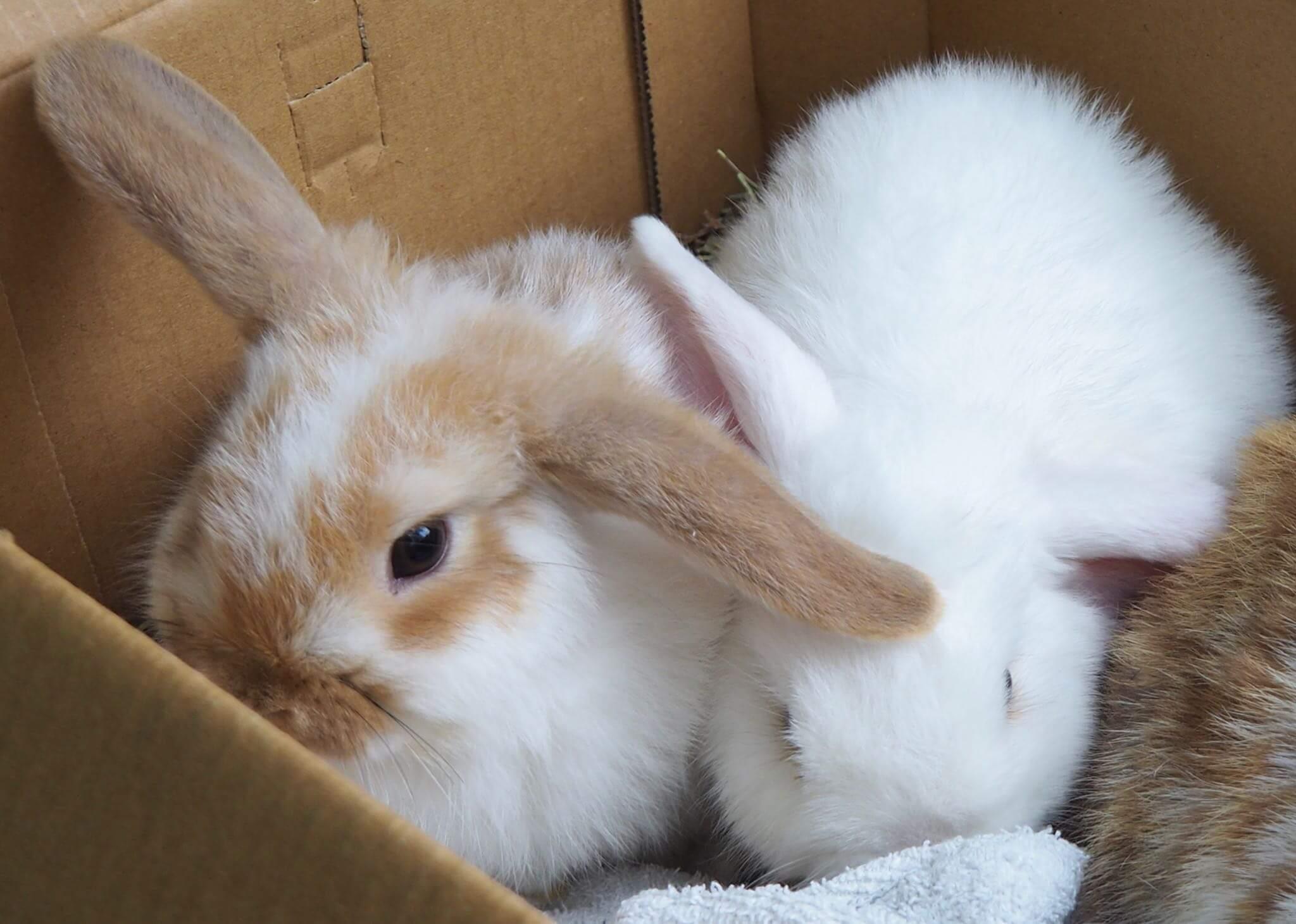 Help jouw konijn de winter door