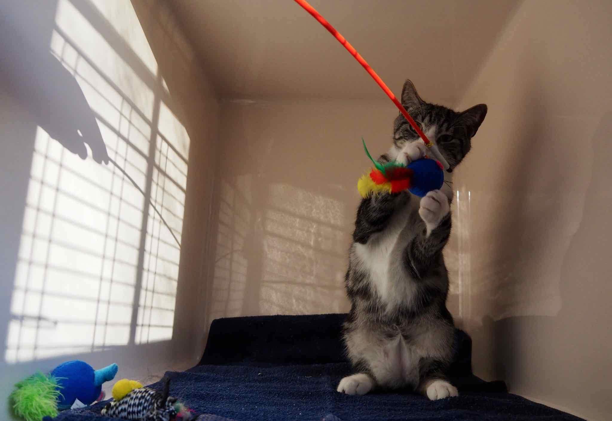 Voedselverrijking voor katten