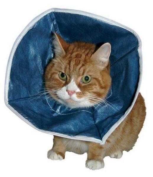 Buster kattenkraag